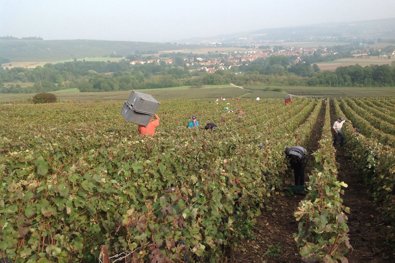 Visite du Vignoble Champenois